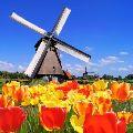 nizozemec